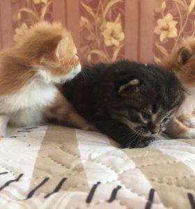Коты даром!