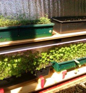 Растения Сооружения