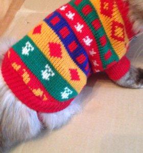 Костюм для кошки или маленькой собачки и носочки
