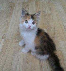 Чудо - котёнок в дар
