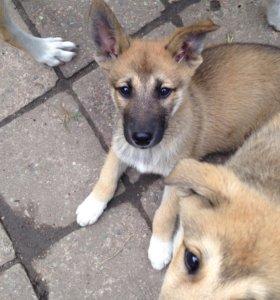 Милые активные щеночки