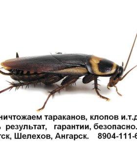 Травим насекомых, (тараканы, клопы, клещи, и пр )