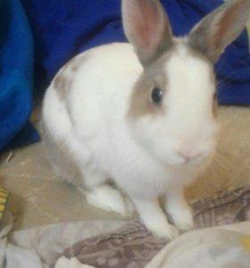 Продается очаровательный кролик