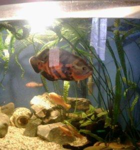 Продается аквариум угловой 380 литров