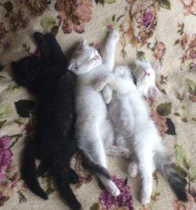 Продам котят в заботливые и ответственные руки))