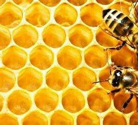 Мед цветочно-липовый.
