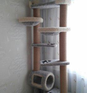 Комплекс для кошек.