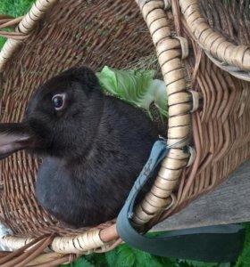 """Кролики - порода """"Бабочка"""""""