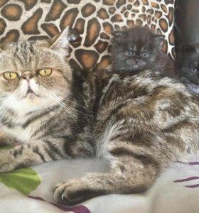 Котята от кошки- экзота