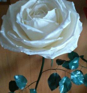 Интерьерные напольные розы