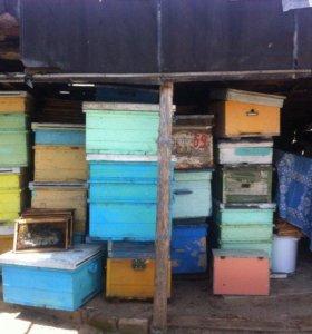 Продам пасеку без пчёл