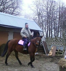 Товары для лошади