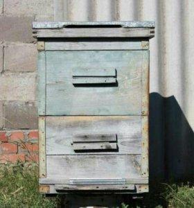улики лежаки пчёлы