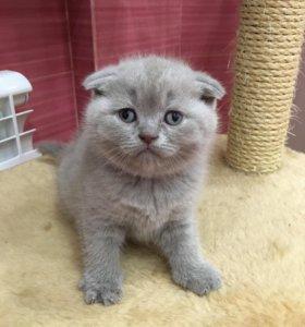 Плюшевые котята! Большой выбор!