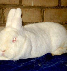 Кролики 1000 за шт срочно