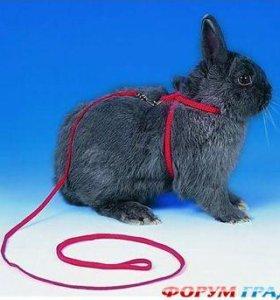 Поводок для кошки,кролика