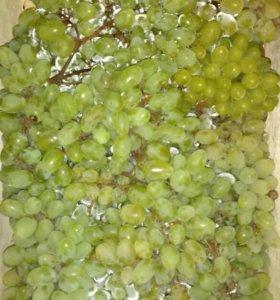 Домашний виноград
