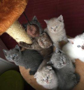 Распродажа плюшевых котят!