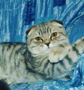 Приглашаем кошку для вязки