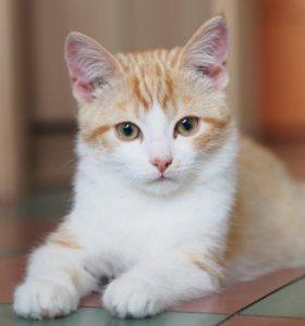 Милый рыжий котёнок в надежные руки