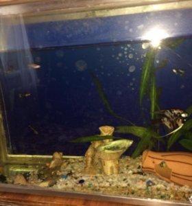 Продам рыбок вместе с аквариумом!
