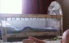 Продам кроватку и два матраса