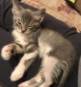 Котёнок(мальчик)