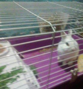 Декоративный кролик вместе с клеткой