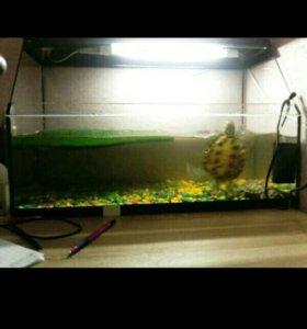 Две красноухие  черепахи и аквариум с фильтром