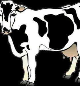 Продадим корову