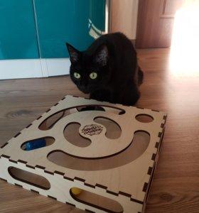 Игрушка-лабиринт для кота