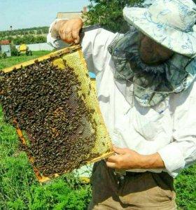 Мёд (гречиха)