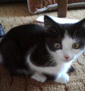 Котенок Мася 3 месяца