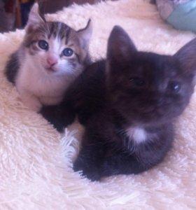 Отдаются котятки в добрые руки)ручные и игривые))