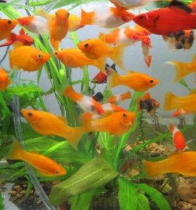 Рыбки, креветки, корма, растения, грунт.