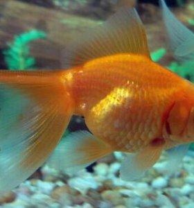 Рыбки в ассортименте