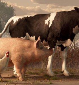 Покупаем коров