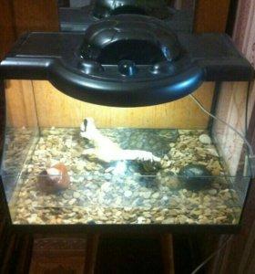 Террариум с черепахой продам