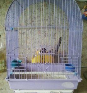 Попугаи и клетки