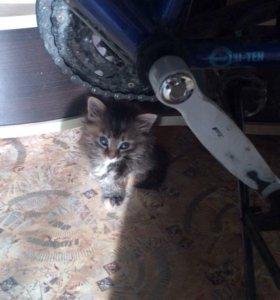 Отдам маленьких милых котят
