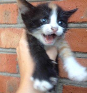 3 котёнка все девочки