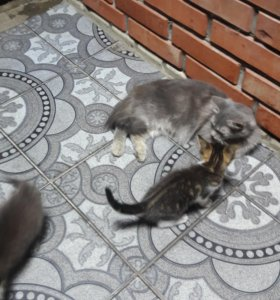 Отдам кошку и котят в добрые руки