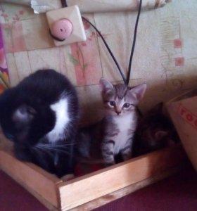 телефоны, отдам кошек в кулебаках владельцев ККТ
