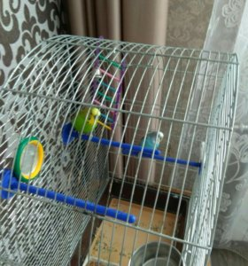 2 попугая. Девочка и мальчик.