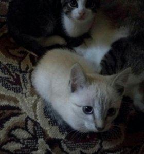 Котята (мальчики)