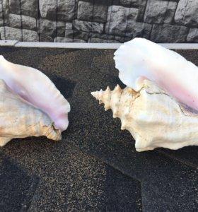 Океанские Раковины - Ракушки