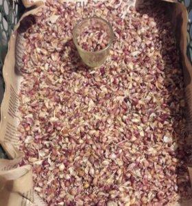 Продаю семена Озимого чеснока