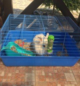 Декоративный кролик с клеткой