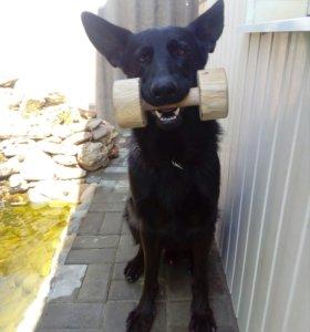 Апорт для собак