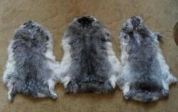 Шкуры кролика